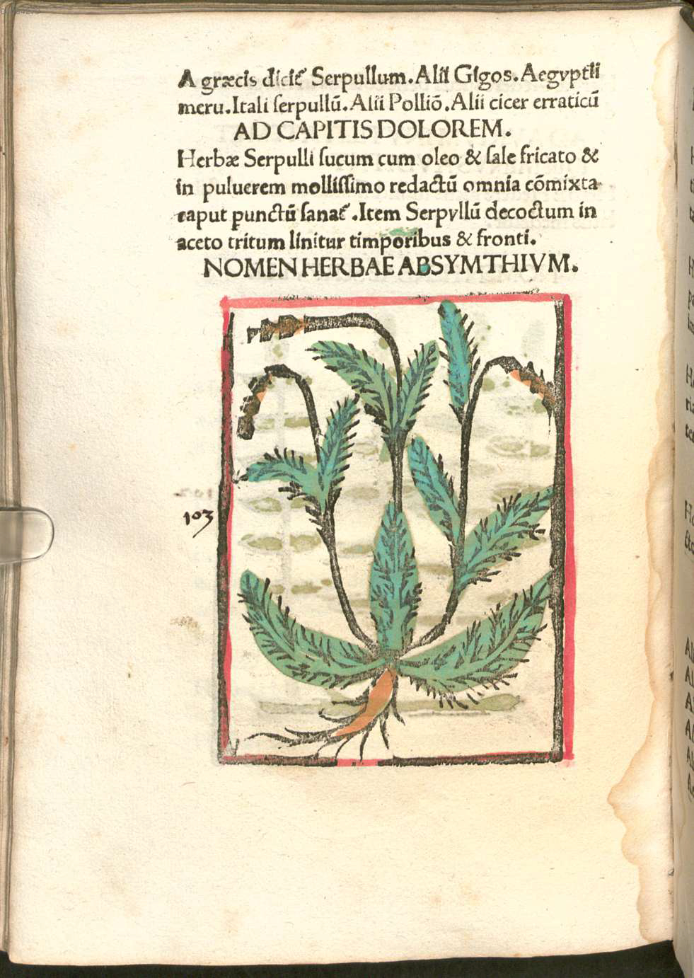Detail of page from Herbarium apulei with illustration of herb.  Please click to view entire image.