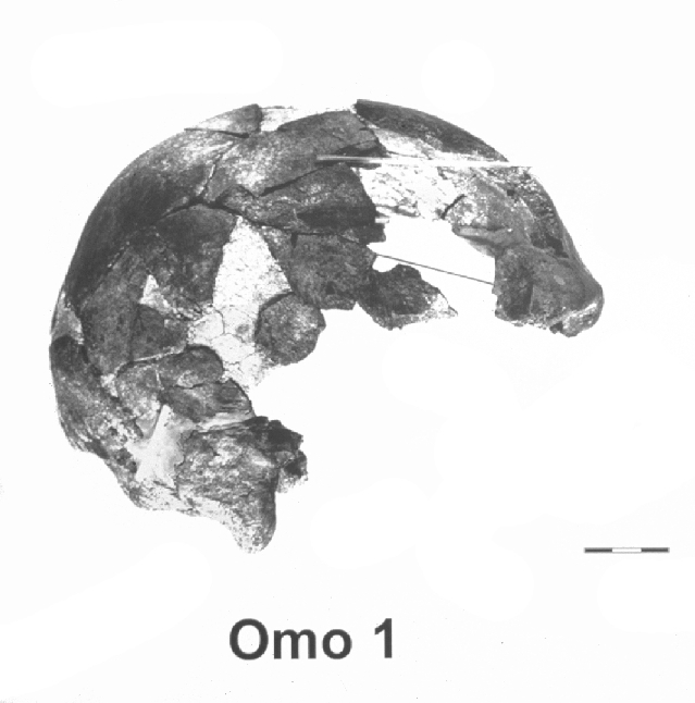 Scull from the River Omo. (Click on image to view larger.)