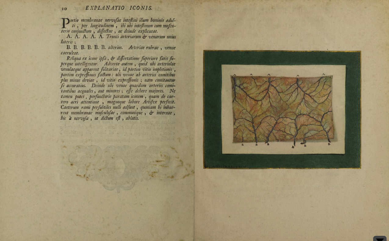 The first three-color process printed illustration in a medical book by Jan Ladmiral in Albinus