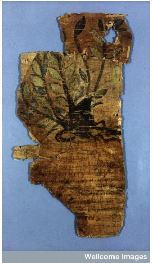 The Johnson Papyrus. Wellcome Library MS 5753.