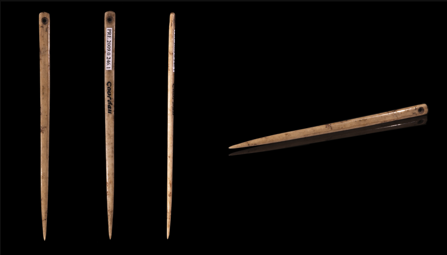 "In August 2020 I was unable locate a photograph of the bone point resembling a sewing needle found in Siduku Cave. This photograph shows several views of a single flat bone sewing needle from ""Elephant Cave,"" Gourdan–Polignan, Haute-Garonne, classified by Henri Filhol as Magdalenian Upper Paleolithic (between 17,000 and 10,000 BCE) Size : 59x3x2 mm. Muséum de Toulouse."