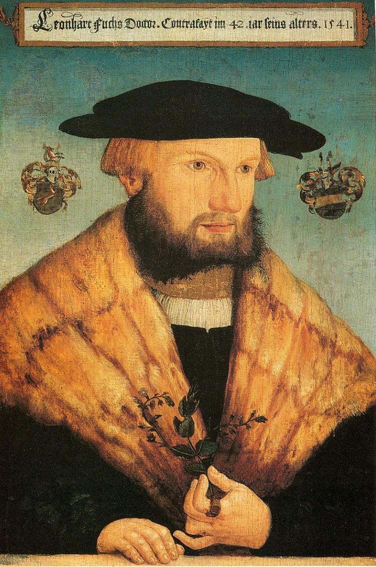 Portrait of Leonhart Fuchs at the age of 42 by Heinrich Füllmaurer. Württembergisches Landesmuseum, Stuttgart.