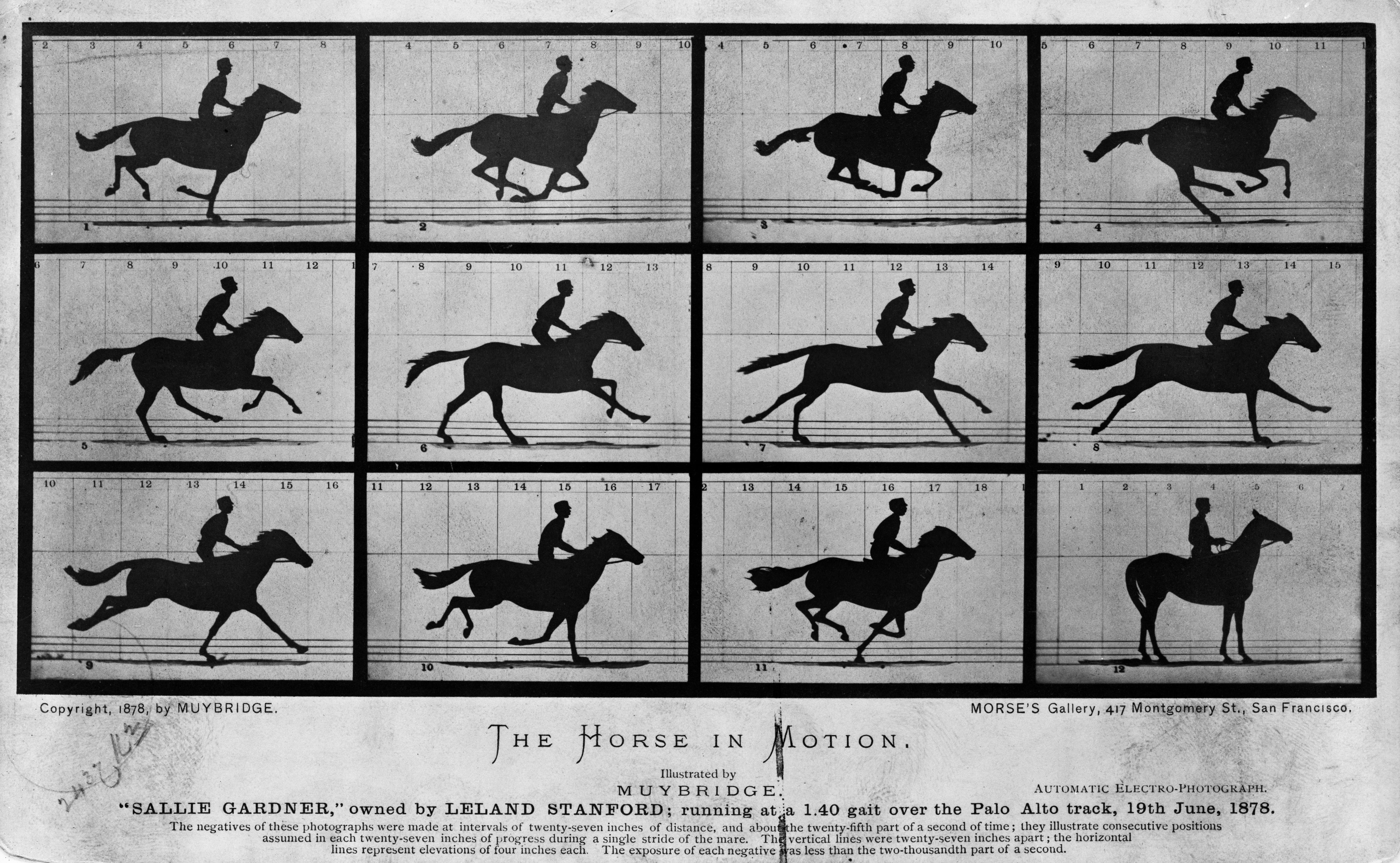 Eadweard James Muybridge,1830-1904,English photographer,studies of motion