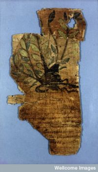 The Johnson Papyrus, a fragment of an early fifth century herbal. (View Larger)