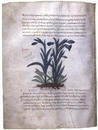 Folio 114v of MS M 652, in the Pierpont Morgan Library. (View Larger)