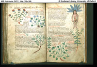 Folios 33v-34r from MS. Ashmole 1431, an eleventh century copy of the Herbal of Pseudo-Apuleius. (View Larger)