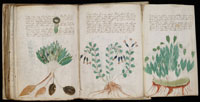 Several pages from the indecipherable Voynich Manuscript. (View Larger)